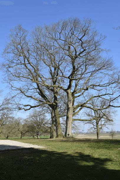 Hoge brede bomen