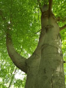 Hoge boom met felgroene bladeren